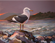 DSC05247 Morro Bay Gull  Sunset  a  400 CROPPED correctly 30pct
